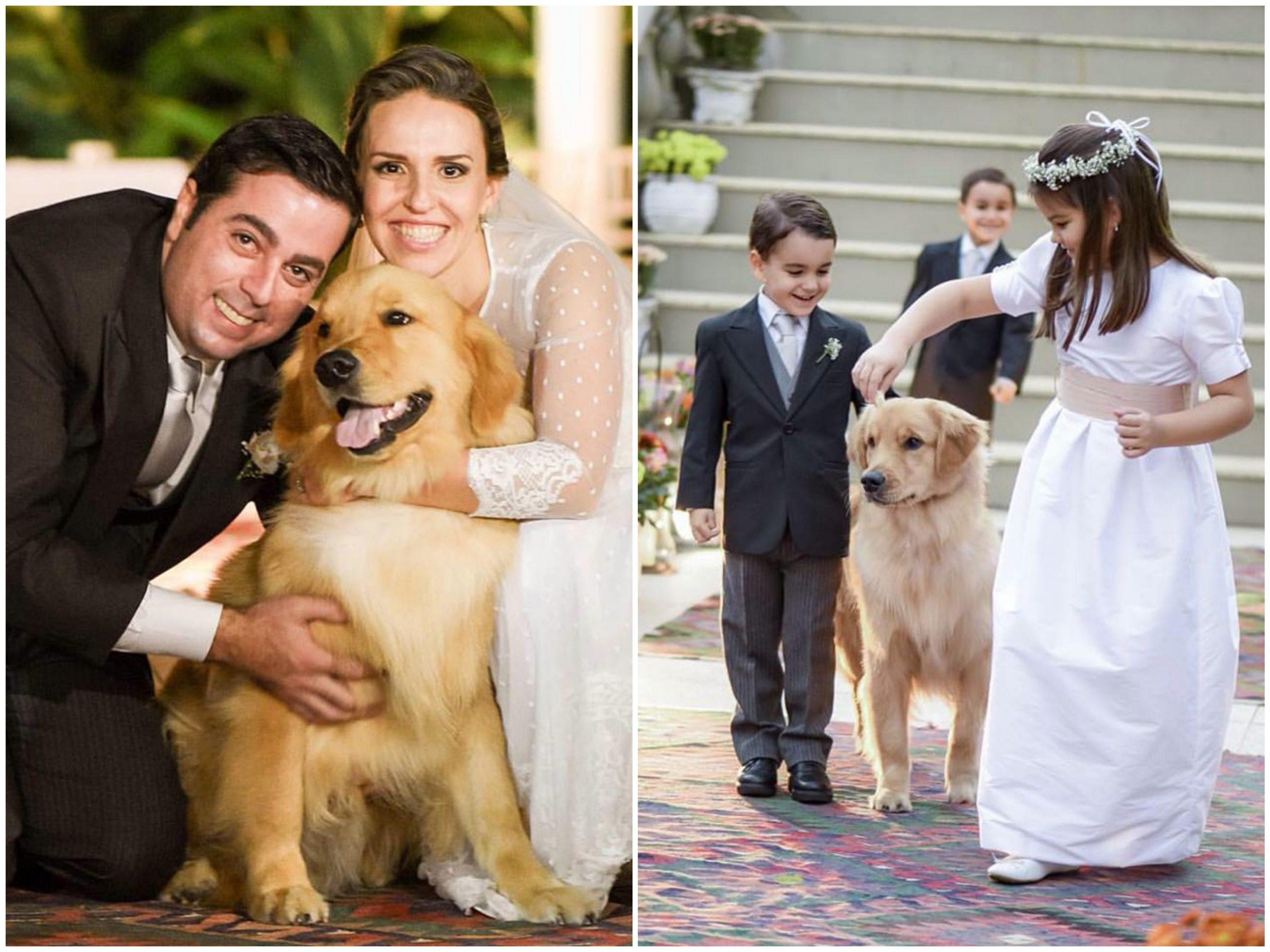 cachorro-aliança-casamento