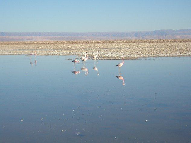 Salar-de-Atacama-633x475