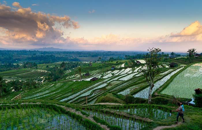 Jatiluwih-Rice-Fields