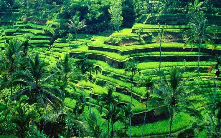 Tegalalang-Rice-Terrace-750x469
