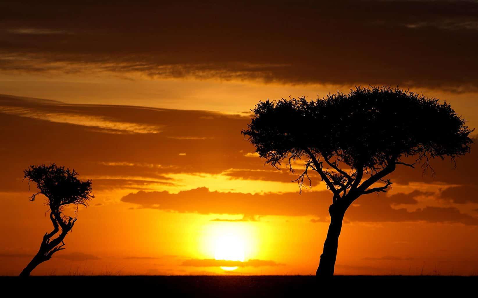 safari-na-africa-6