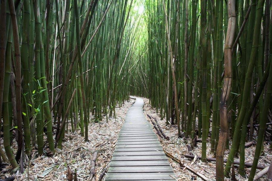 Kipahulu-Bambus