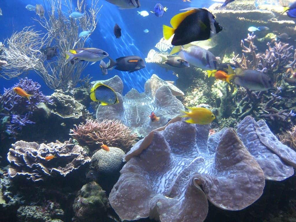 Waikiki-Aquarium