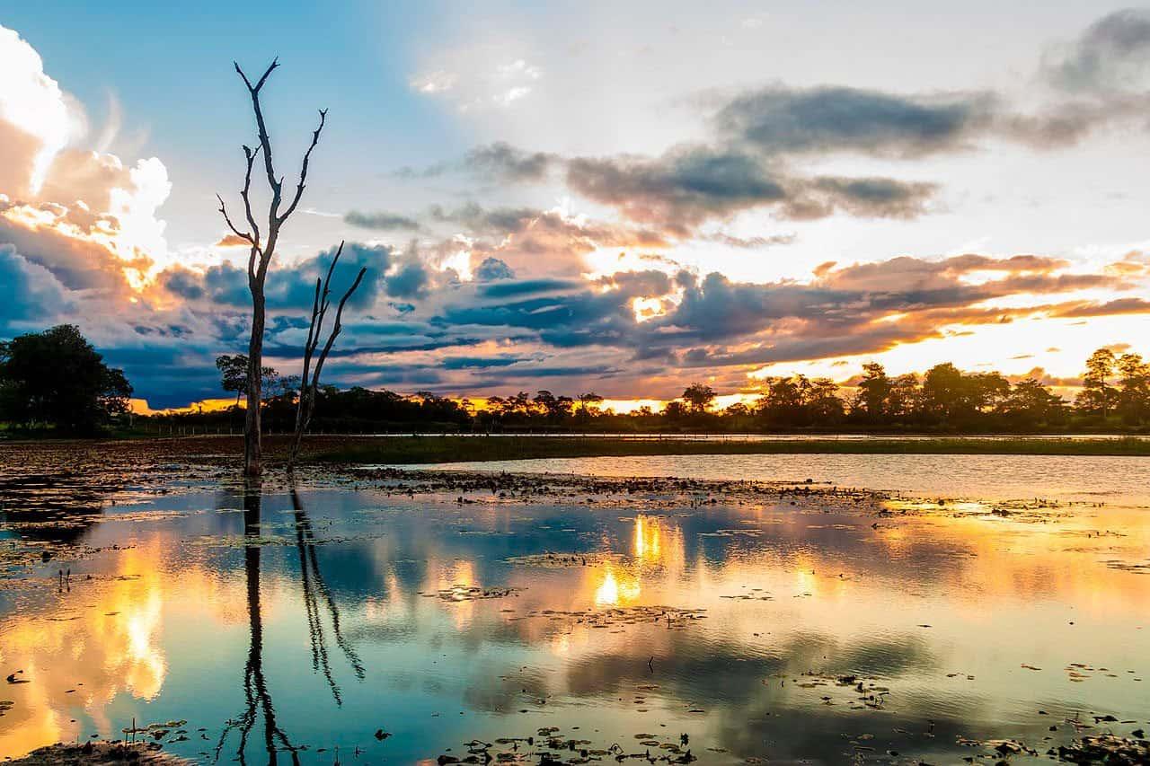 Pantanal_em_Mato_Grosso_Brasil