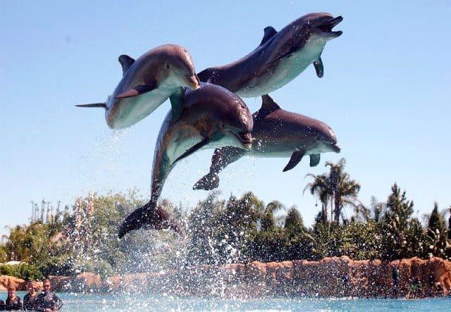 dolphin-cove-jamaica-negril-caseme