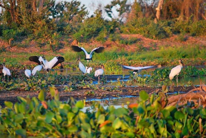 lua-de-mel-brasil-Pantanal_Birds_foto_Ana-Raquel-S.-Hernandes