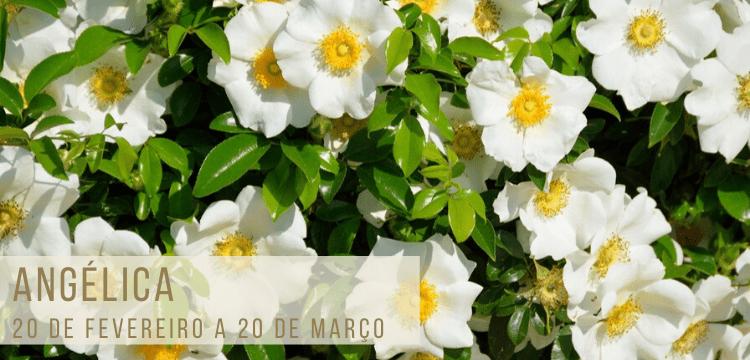 flores-signo-floral-750x360