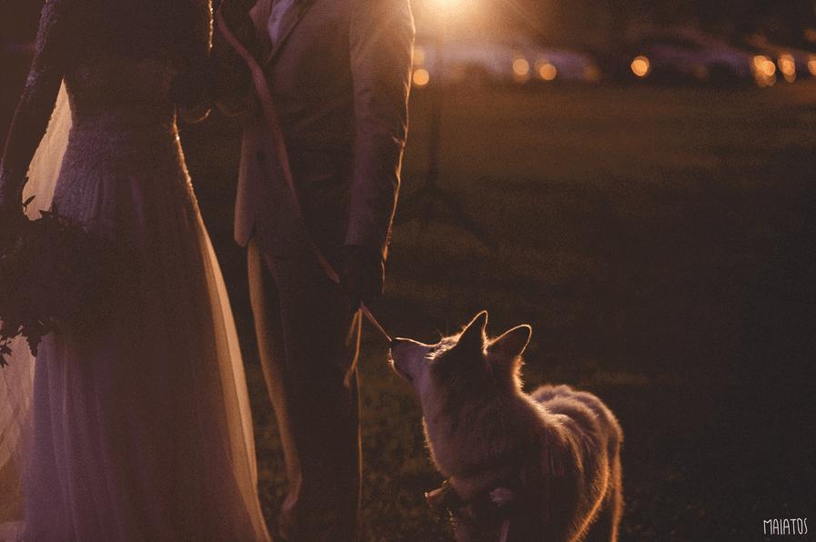 pets-no-casamento-maiatos-2
