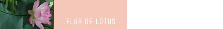 5_HEAD_Flor-de-Lótus-750x100
