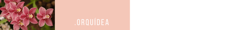 5_HEAD_orquidea-750x100