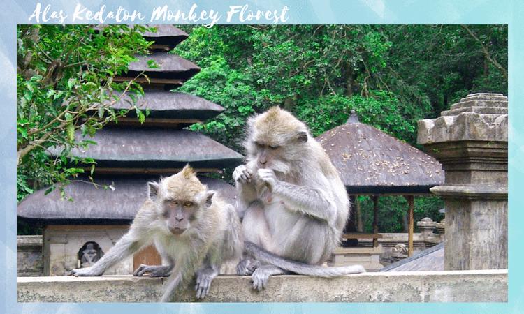 Alas-Kedaton-Monkey-Florest