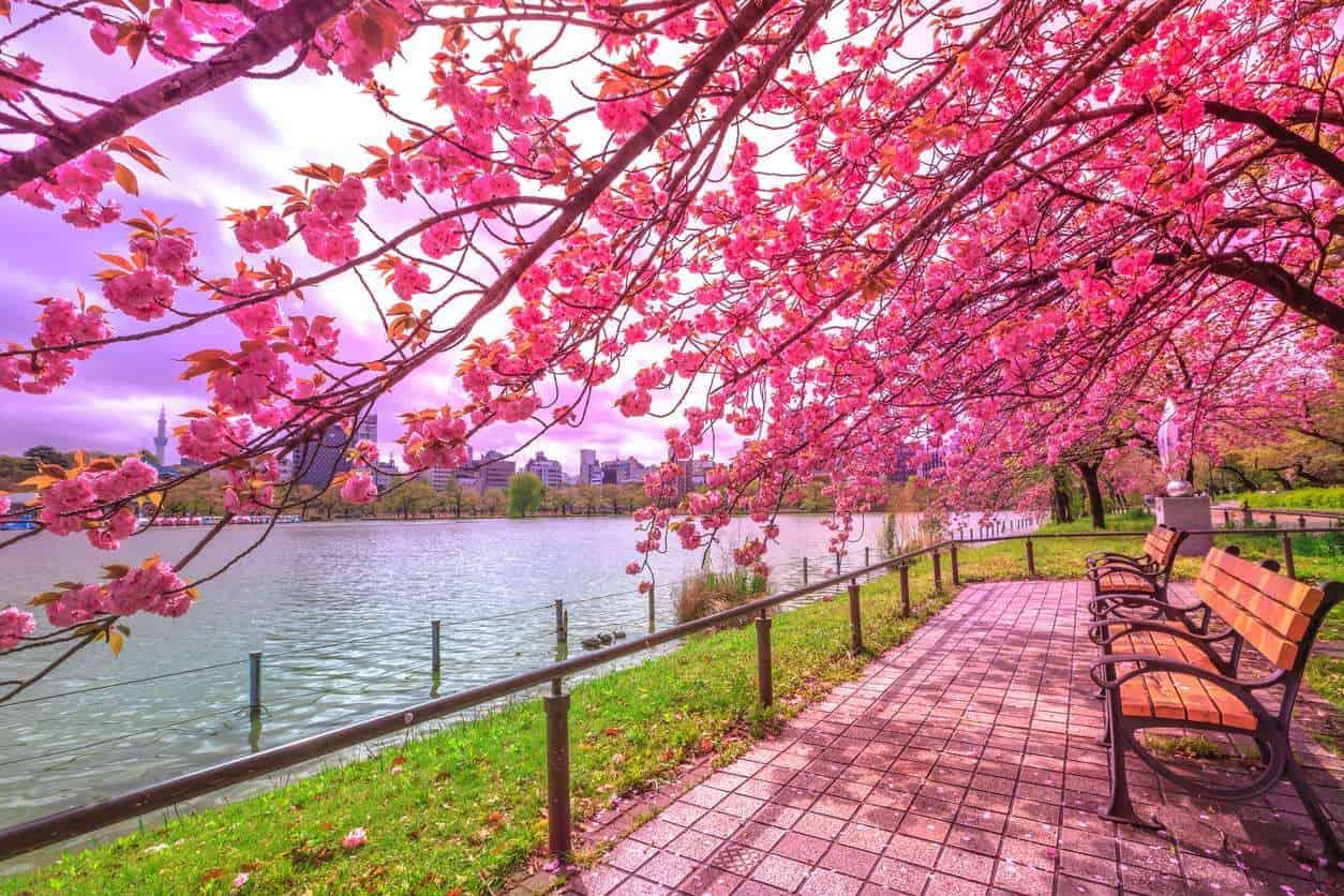 Parque-Ueno-lua-de-mel-em-tóquio