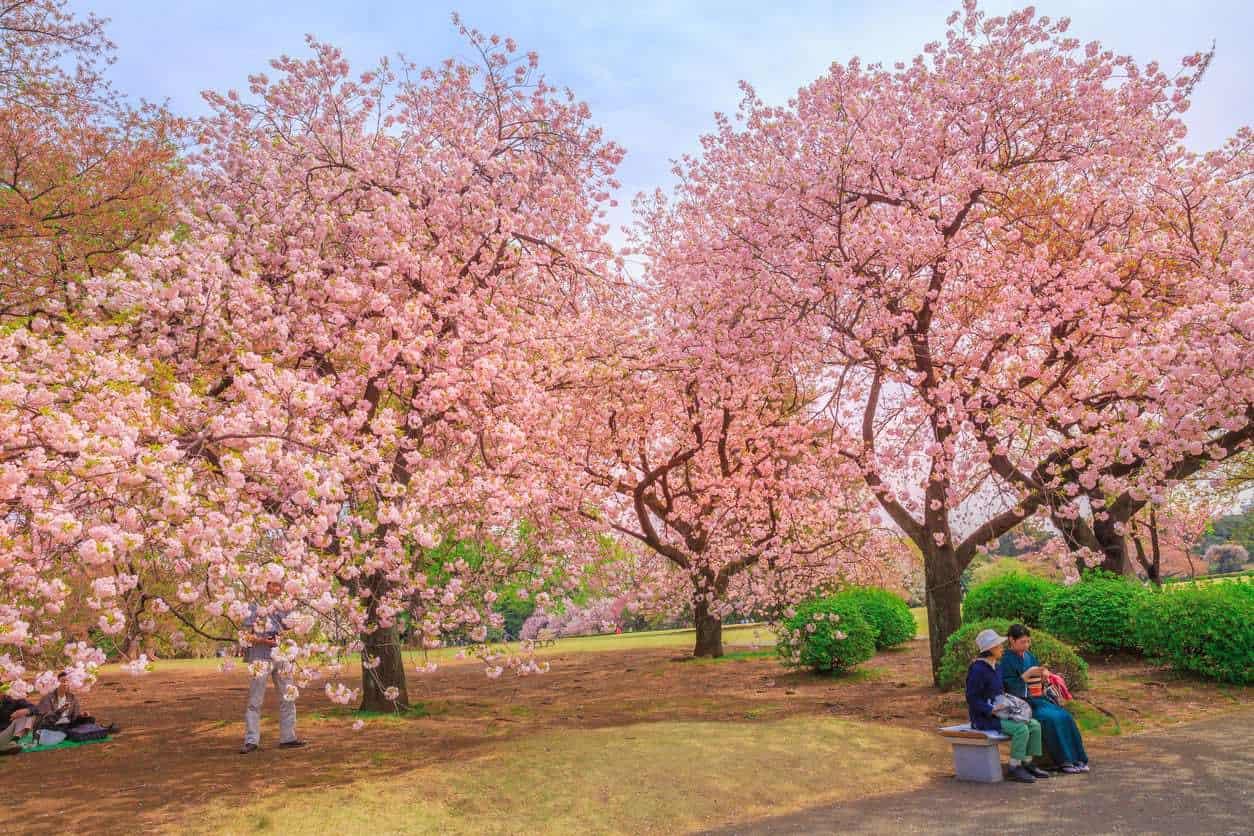 Shinjuku-Gyoen-National-Garden-lua-de-mel-em-toquio