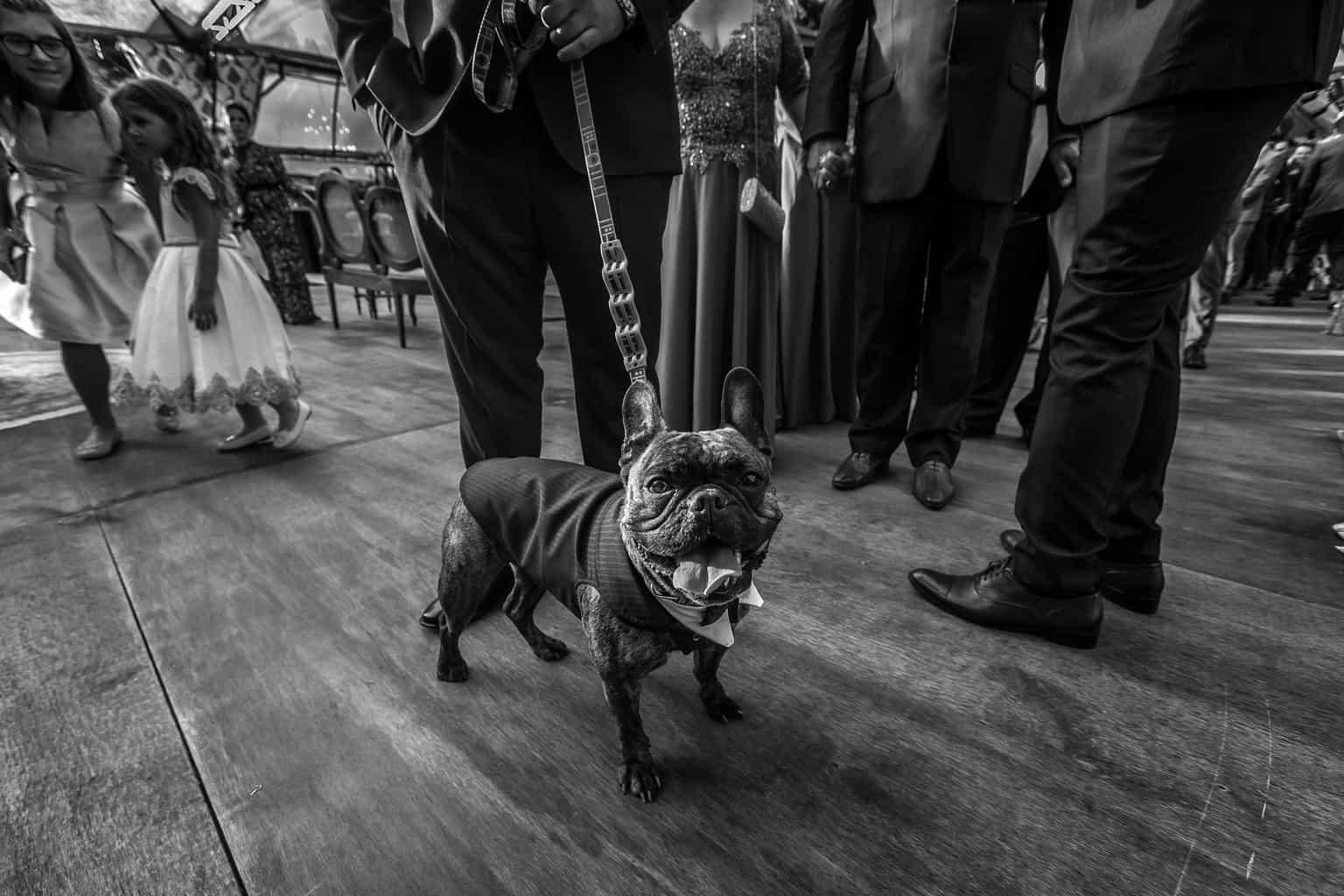 cachorro-casamento-Marcela-e-Luciano-pet5