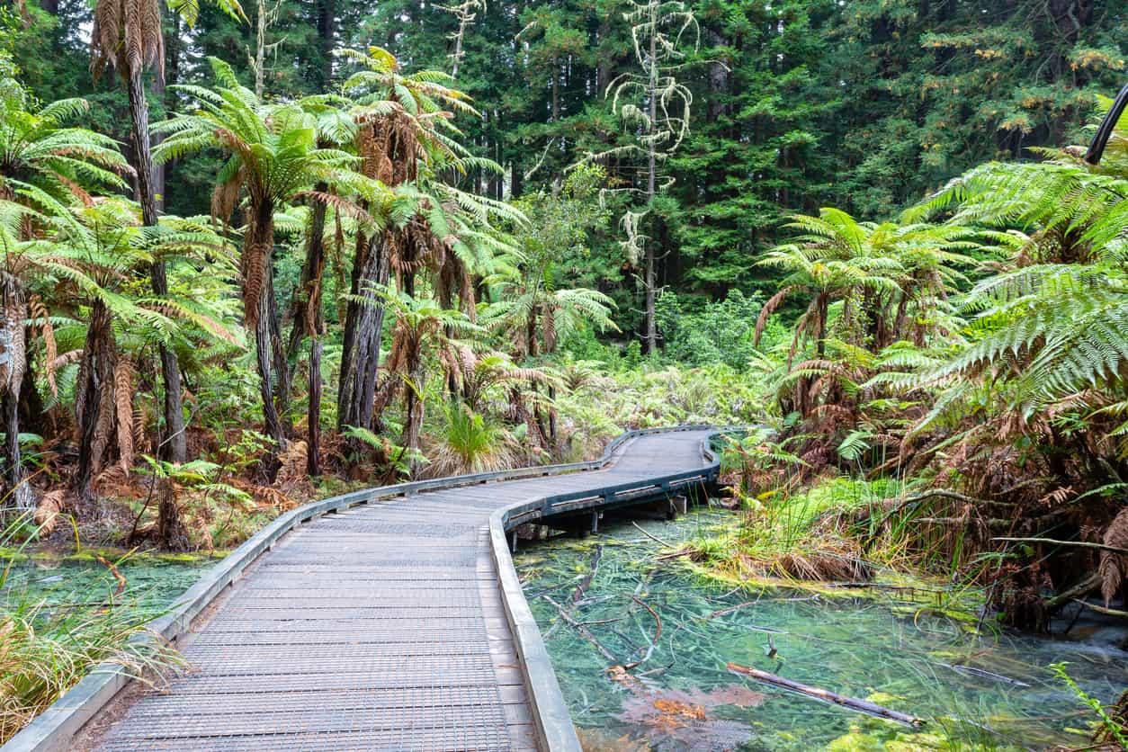 Whakarewarewa-Forest-Track-1