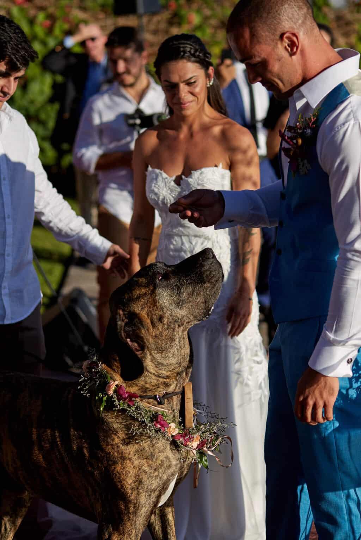 cachorro-casamento-bruna-e-frederic-cerimonia-ao-ar-livre-cerimonial-camila-luz-decor-renata-paraiso-decoracao-boho-fotos-dos-noivos-noivos-no-altar-pet-no-casamento45