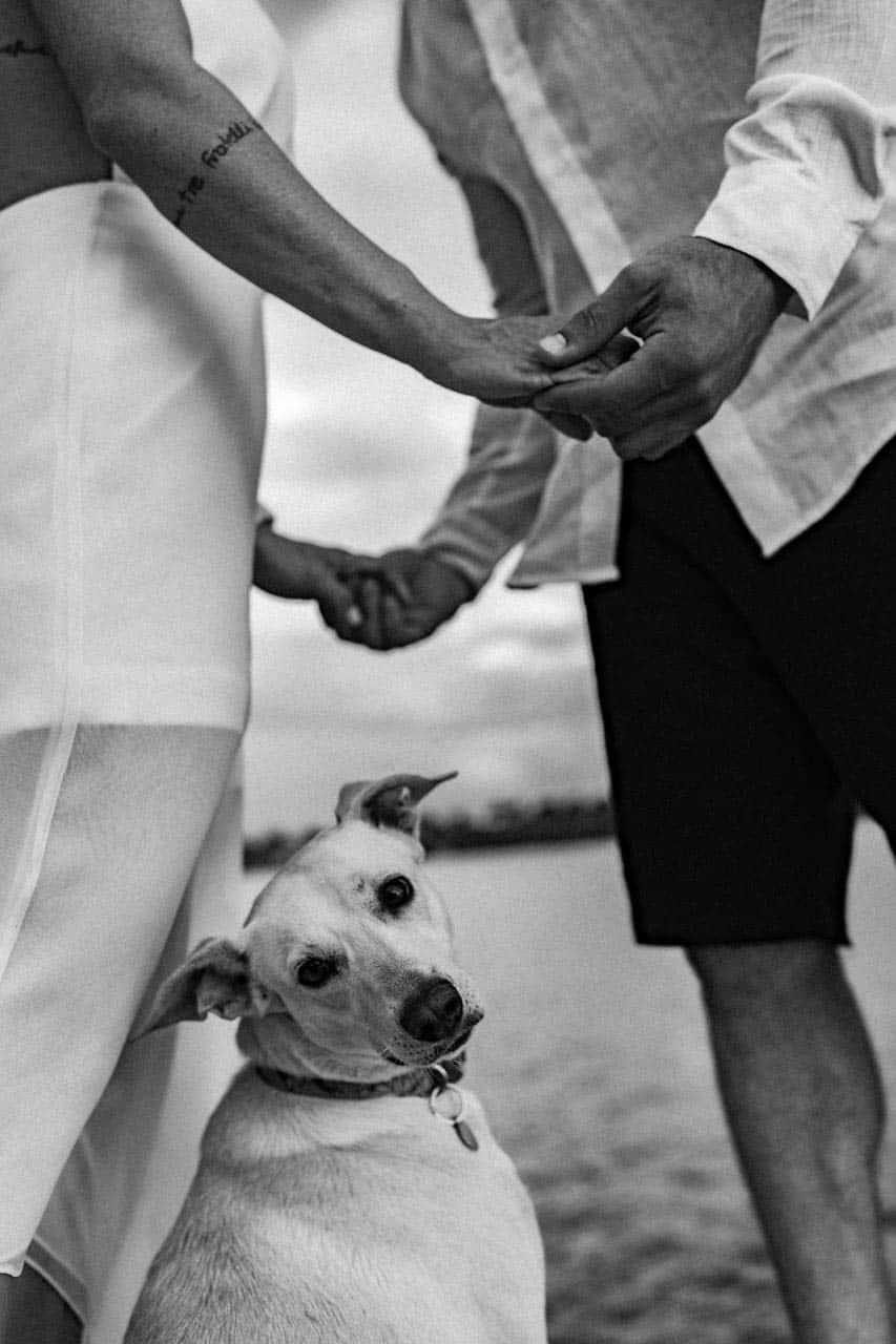 cachorro-casamento-bruna-e-frederic-cerimonia-ao-ar-livre-cerimonial-camila-luz-decor-renata-paraiso-decoracao-boho-pet-no-casamento42
