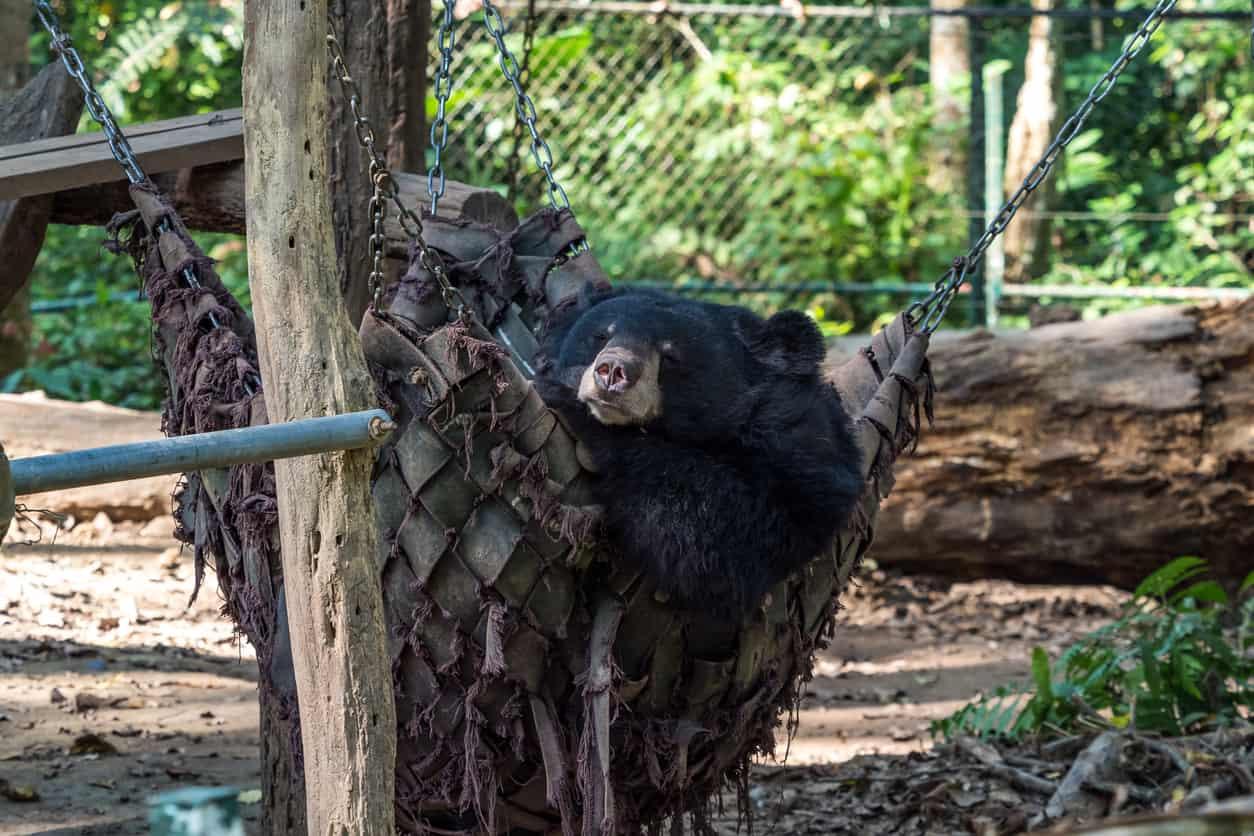 O-Parque-Tat-Kuang-Si-Parque-é-dono-de-atrações-interessantissímas-como-o-Bear-Rescue-Centre-organização-dedicada-à-proteção-dos-ursos.
