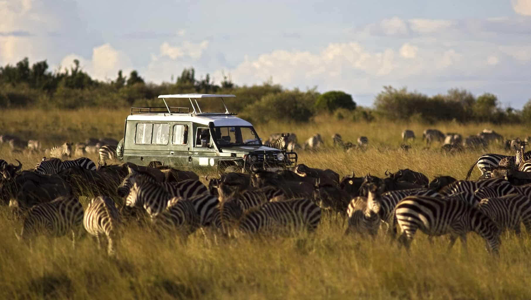 Na-Reserva-Nacional-Masai-Mara-os-safáris-normalmente-acontecem-a-bordo-de-jipes-bem-equipados-e-são-acompanhados-de-guias-especializados.