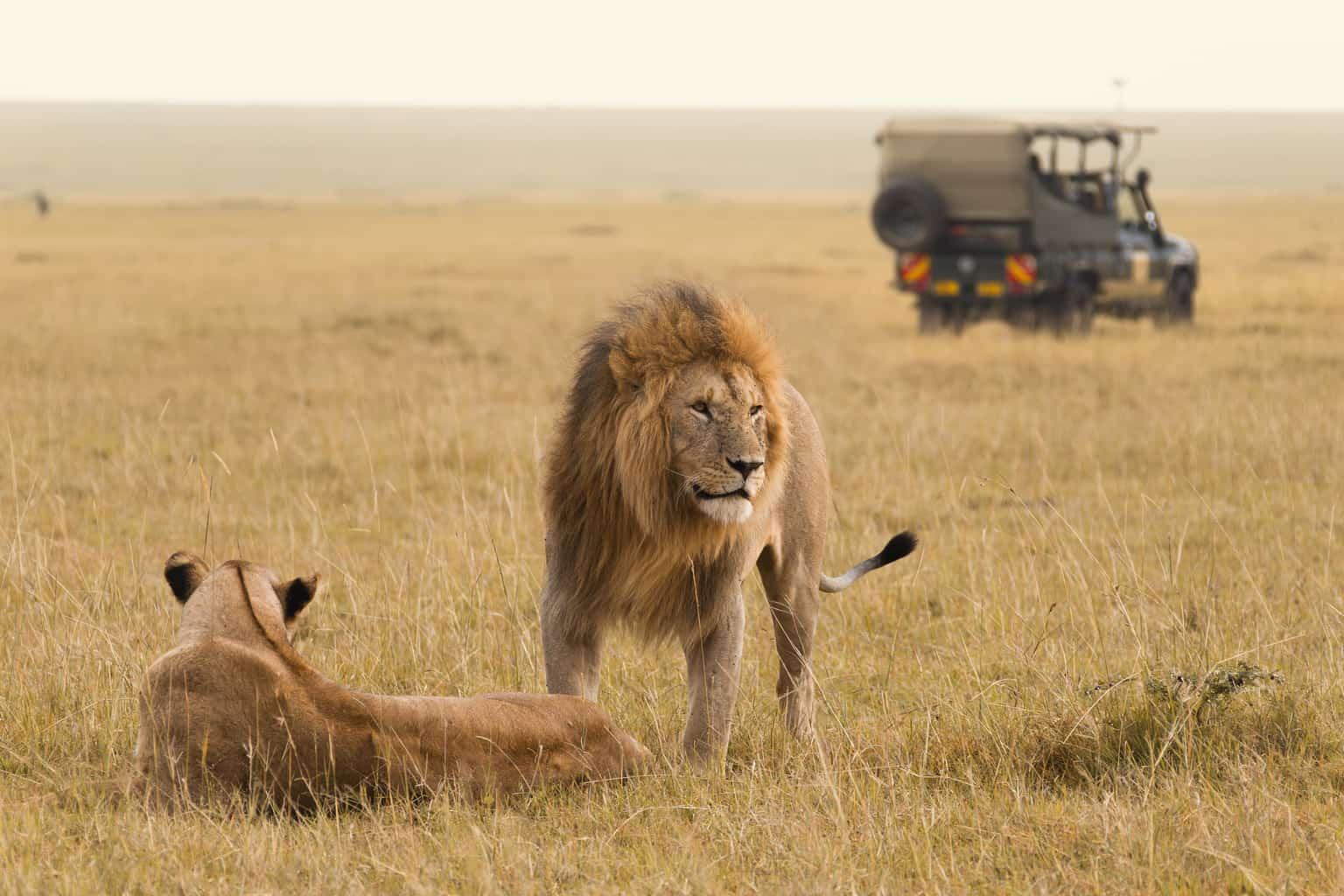 No-Masai-Mara-o-ideal-é-explorar-as-savanas-logo-de-manhã-já-que-esse-é-considerado-um-dos-melhores-momentos-para-a-observação-de-grandes-felinos.