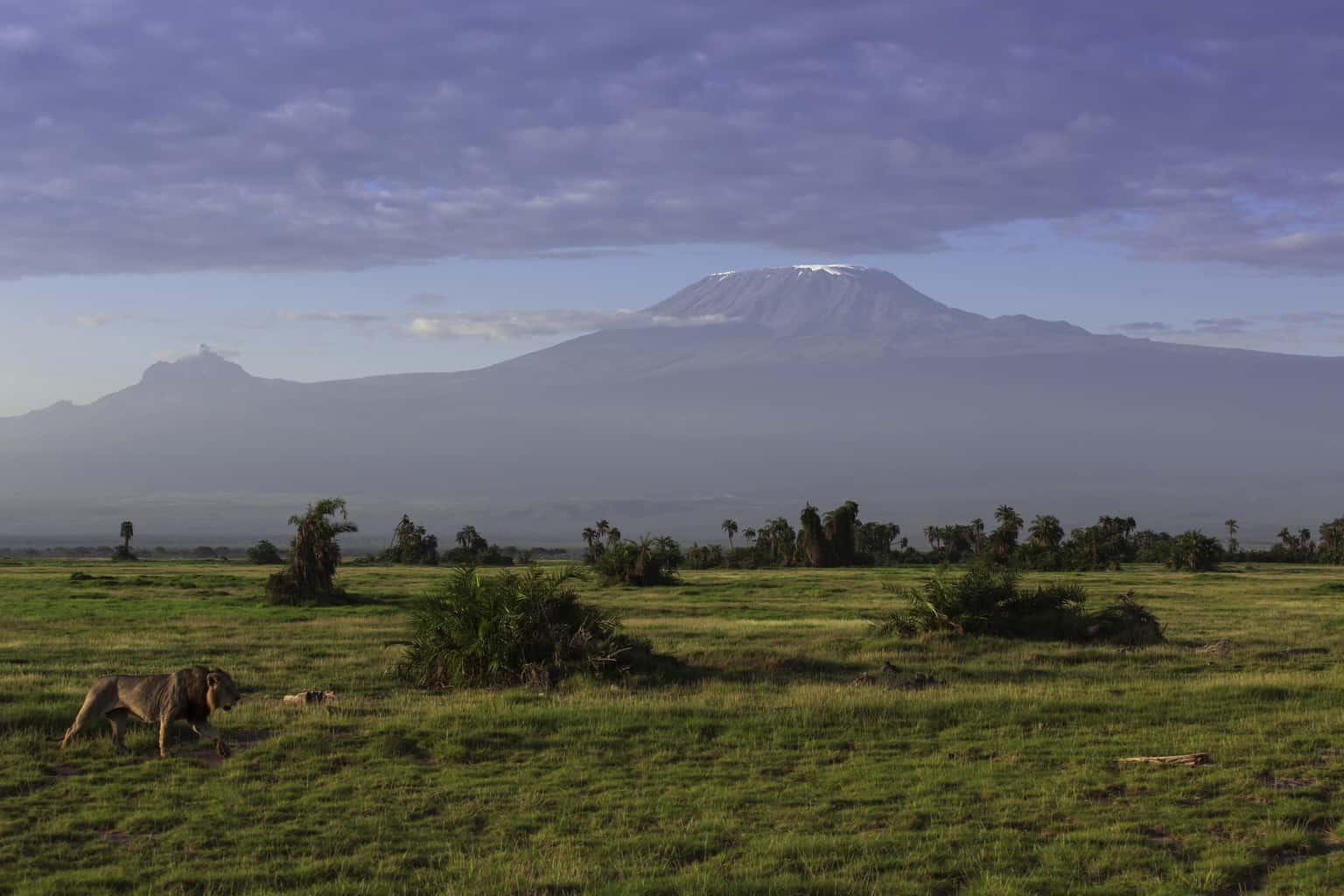 O-Amboseli-ocupa-uma-área-de-quase-40-mil-hectares-e-foi-declarado-Reserva-da-Biosfera-pela-Unesco-em-1991.