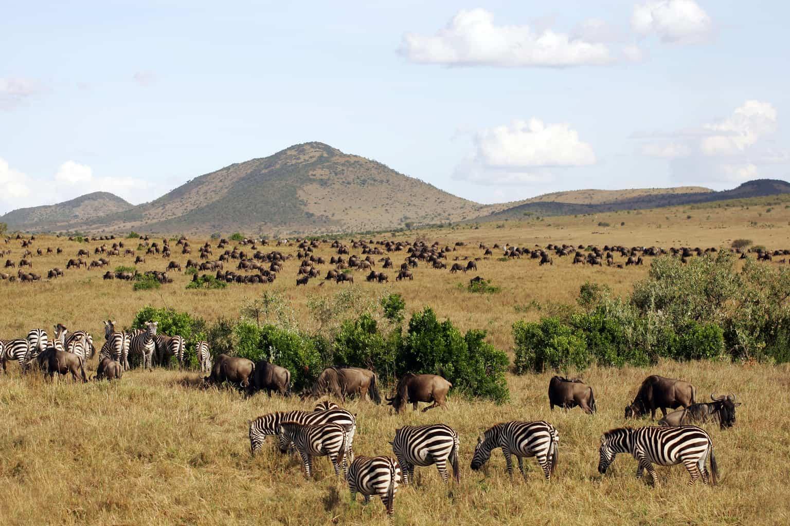 O-Masai-Mara-é-palco-da-Grande-Migração-fenômeno-que-reúne-dezenas-de-espécies-percorrendo-o-parque-em-busca-de-água-e-alimento.