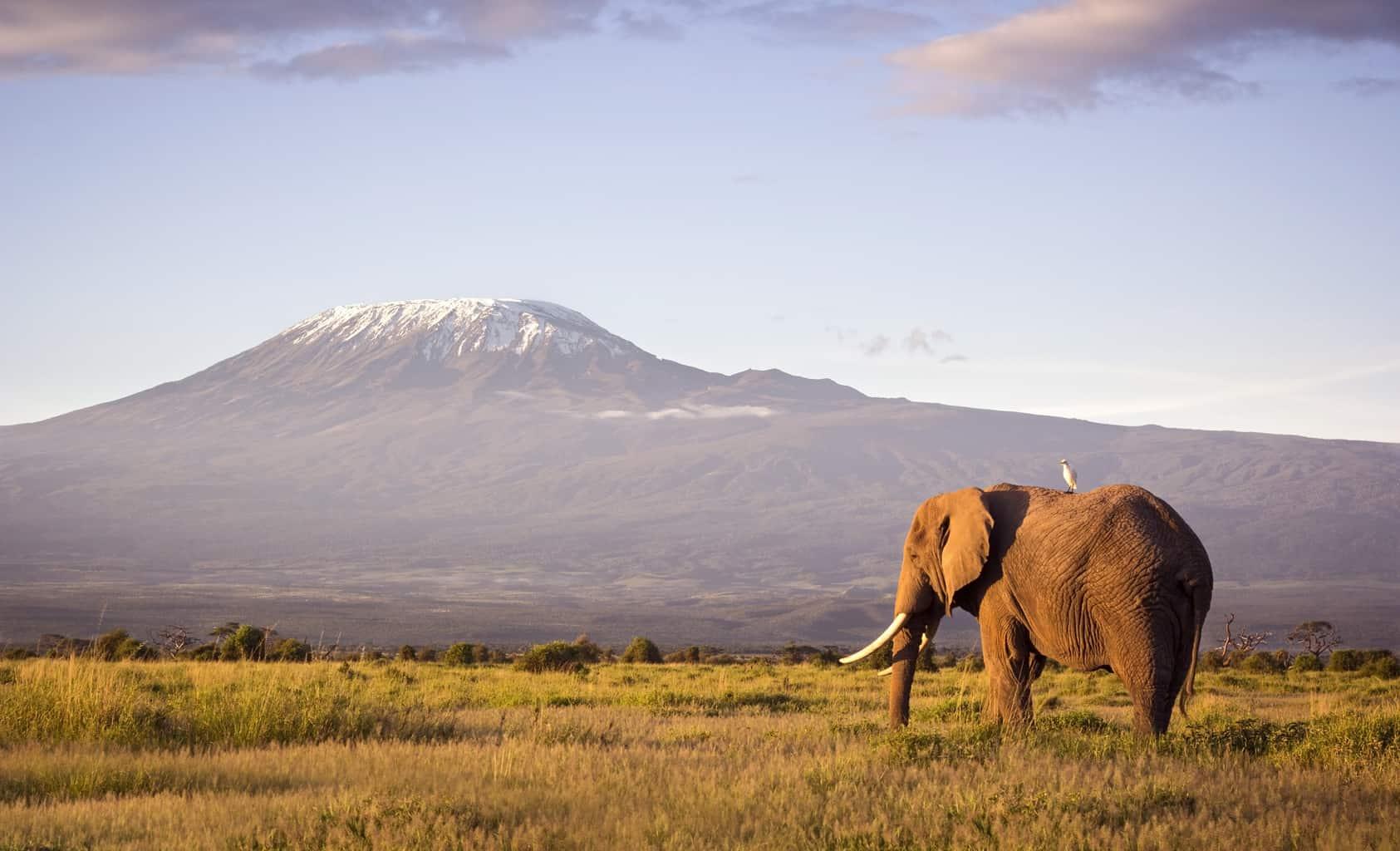 O-Parque-Nacional-de-Amboseli-divide-a-atenção-entre-as-manadas-de-elefantes-e-as-vistas-belíssimas-do-Monte-Kilimanjaro.