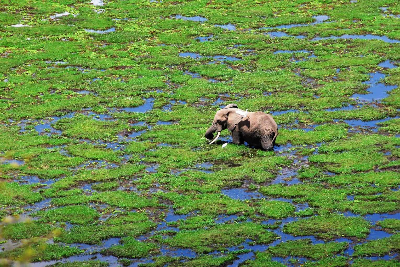 O-cenário-do-Amboseli-impressiona-há-um-contraste-entre-as-zonas-áridas-e-os-pântanos-propícios-para-grandes-espécies-de-mamíferos.