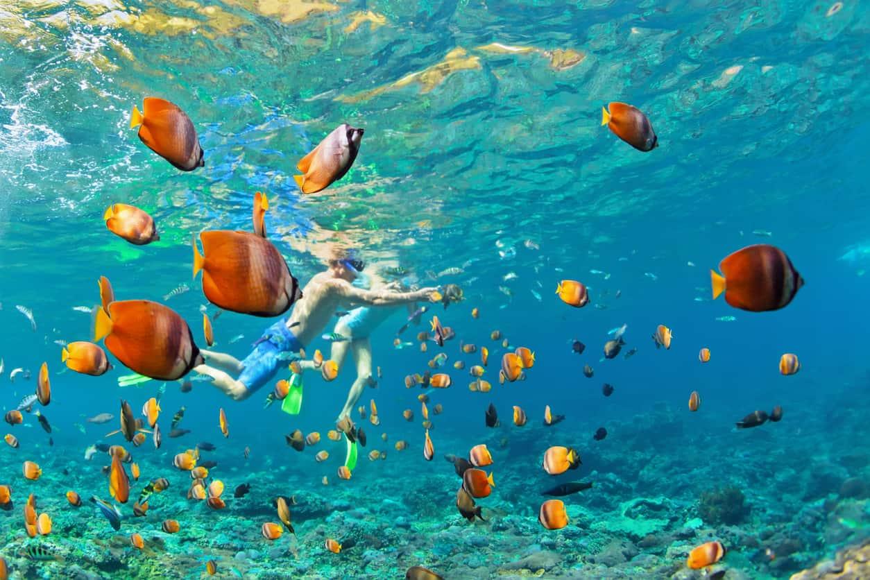 A-fauna-marinha-de-Anguilla-é-supercolorida-e-atividades-como-mergulho-e-snorkelling-permitem-maior-contato-com-a-natureza-intocada-do-oceano.