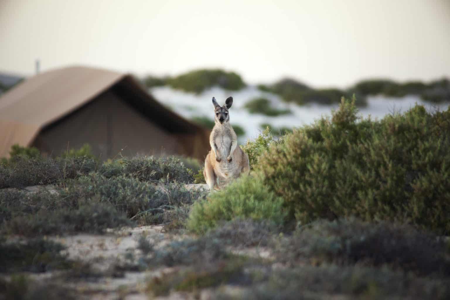 Lua-de-mel-na-Austraia-onde-ficar-SalSalis-3-scaled