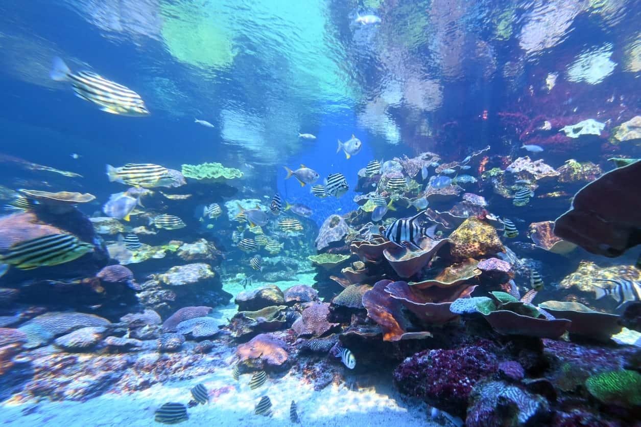 Ningaloo-Reef-Lua-de-mel-na-Austraia-onde-ir-e-ficar-2