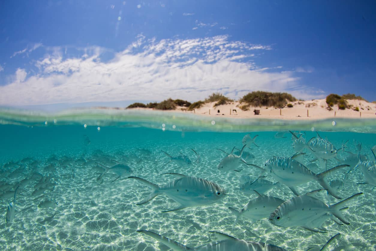 Ningaloo-Reef-Lua-de-mel-na-Austraia-onde-ir-e-ficar-3