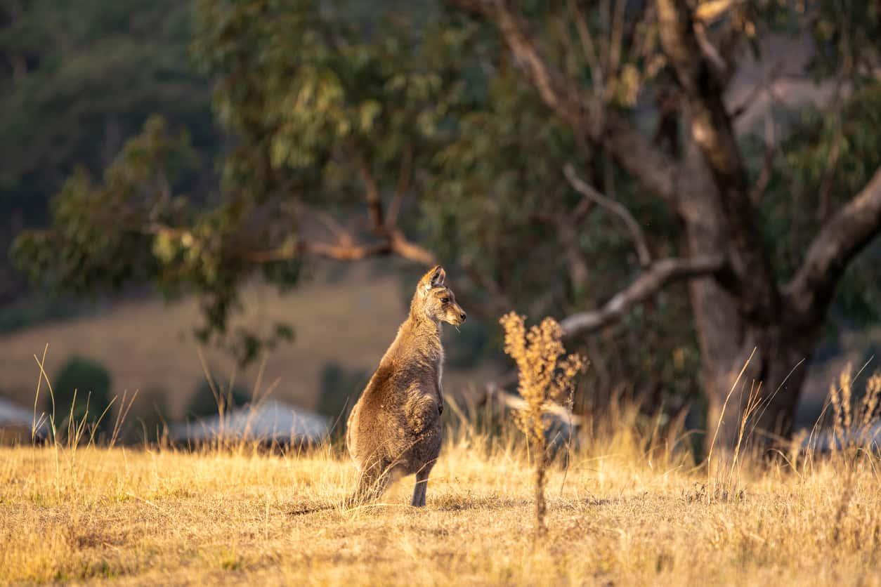 Wolgan-Valley-Lua-de-mel-na-Austraia-onde-ir-e-ficar-2