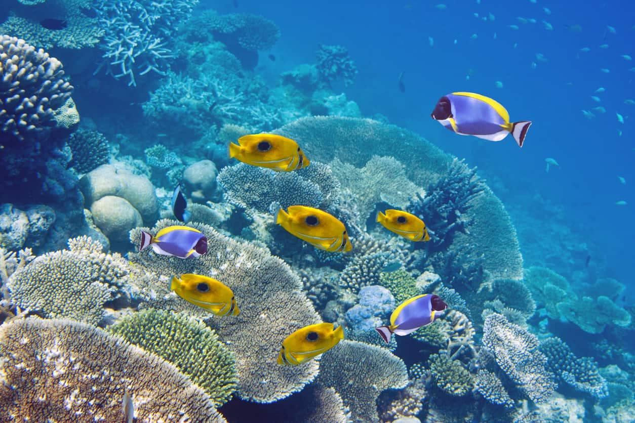 lua-de-mel-ilhas-mauritius-hoteis-Mauritius-Vista-Mergulho