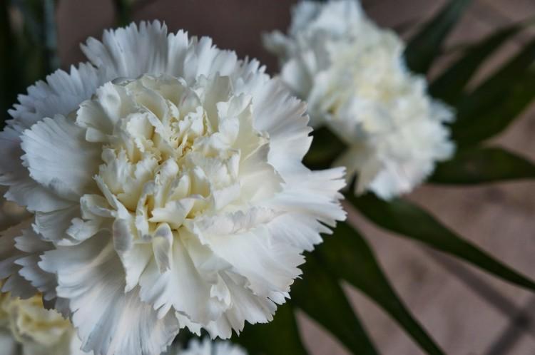 flor-lapela-casamento-caseme-cravo-750x498