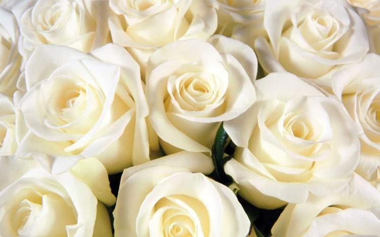 flor-lapela-casamento-rosa-caseme-750x468